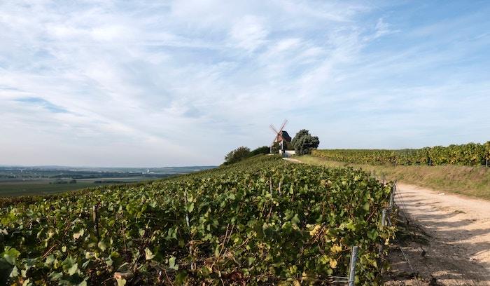Moulin au milieu des champs en Champagne