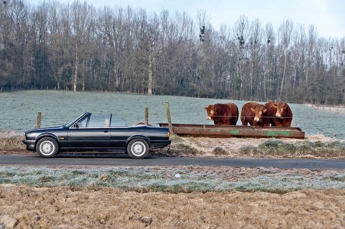 BMW E30 cabriolet de profil sur une route devant des vaches